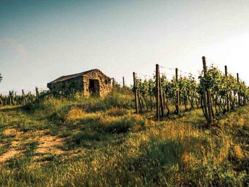 Degustácia vín Dubovský & Grančič