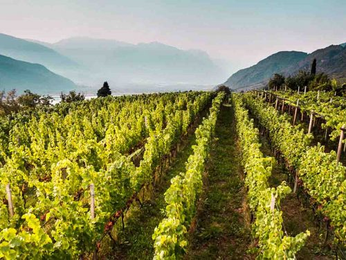 Degustácia vín Wilhelm Walch
