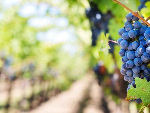Degustácia vín Blaho